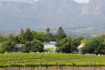 Cape Winelands Tour